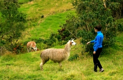 Petting Llamas is one of my favorite Ecuadorian past times.