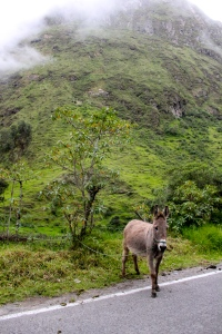 We saw quite a few donkeys on our drive