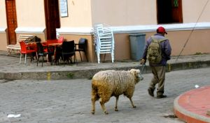 Traditional ways are alive and well in Alausi.