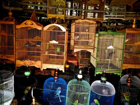 At Jakarta Bird Market